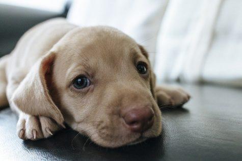 Pet Adoption Increased During the Pandemic