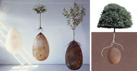Returning to Nature: Burials Reimagined